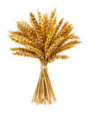 Колоски пшеницы дальше изолированные на белизне Стоковая Фотография