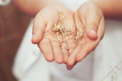 Колоски пшеницы в руке стоковое изображение rf