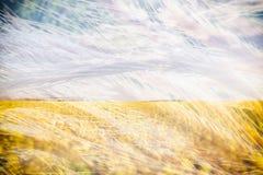 Колоски пшеницы Поле гречихи сбора цветя Желтые wildflowers Природа, поле, земледелие, жизнь фермы двойная экспозиция Стоковые Изображения RF