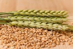 Колосок пшеницы Стоковое Изображение