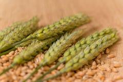 Колосок пшеницы Стоковое фото RF