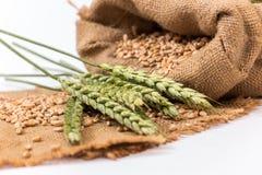 Колосок пшеницы Стоковая Фотография RF
