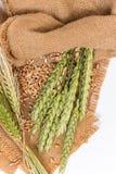 Колосок пшеницы Стоковая Фотография