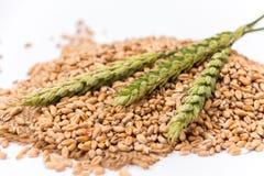 Колосок пшеницы Стоковое Фото