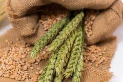 Колосок пшеницы Стоковые Фото
