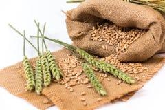 Колосок пшеницы Стоковые Изображения
