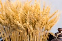 Колосок пшеницы Стоковое Изображение RF