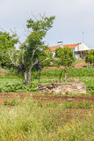 Колодец и плантация фермы в Сантьяго делают Cacem Стоковые Изображения