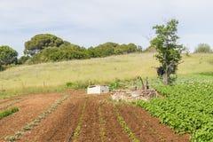 Колодец и плантация фермы в Сантьяго делают Cacem Стоковое Фото