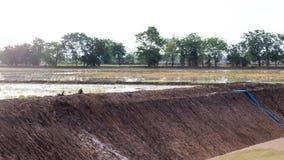 Колодцы грунтовой воды в рисовых полях Стоковые Изображения RF