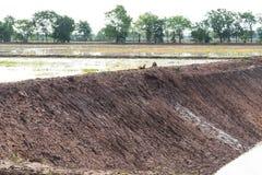 Колодцы грунтовой воды в рисовых полях Стоковые Изображения