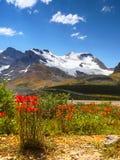 Колумбия Icefield Mt яшма icefield ледника Канады канадская columbia athabasca alberta известная большинств национальный парк при Стоковая Фотография