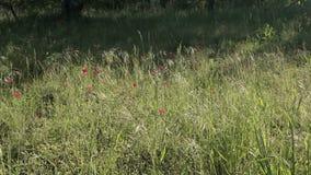 Колхозный двор Европы сток-видео