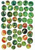 Кольца акварели скачками, колеса, формы искусства вектора, запятнали абстрактные формы Стоковое Фото