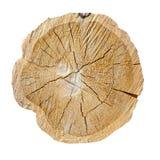Кольца дерева, журнал Деревянная текстура Стоковая Фотография