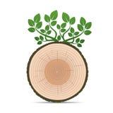 Кольца дерева и зеленых листьев пристаньте вектор к берегу кассеты иллюстрации девушки цвета читая песочный Стоковые Фотографии RF