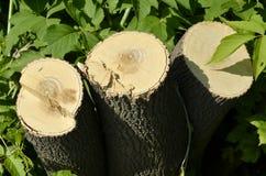 Кольца дерева Стоковое фото RF
