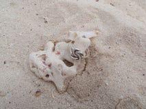 Кольца на коралле в песке Стоковое Изображение