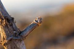 2 кольца на старом дереве Стоковая Фотография