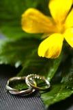 Кольца перед свадьбой Стоковые Фото