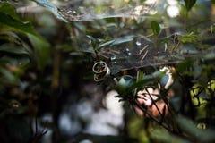 кольца предпосылки яркие wedding белизна Стоковые Фотографии RF