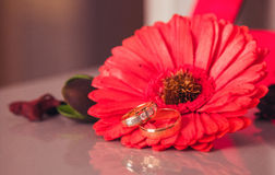 кольца предпосылки яркие wedding белизна стоковые изображения rf