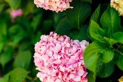 кольца цветков wedding Стоковые Фото