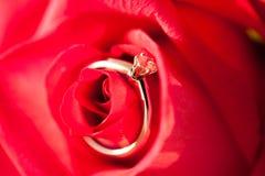 Кольцо диаманта золотое на лепестках красной розы Стоковая Фотография RF