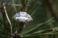 Кольцо с бриллиантом на сосне стоковые изображения rf