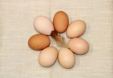 Кольцо яичек фермы свежих Стоковая Фотография