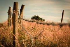 Колючая проволока в кукурузном поле Стоковое Изображение RF
