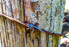 Колючая проволока и покрытый мх деревянный столб Стоковые Фото