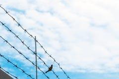 Колючая проволока на голубом небе с птицей на проводе, концепции свободы Стоковые Фото