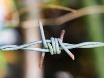 Колючая проволока ржавчины с зеленой предпосылкой природы Стоковая Фотография RF