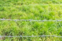 Колючая проволока с травой в предпосылке Стоковое Фото