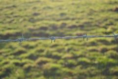 Колючее поле Стоковое Изображение RF