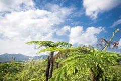 Колючий папоротник дерева Стоковые Фото