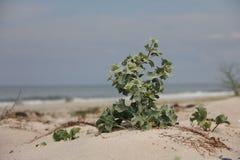 Колючий цветок Стоковое Изображение RF