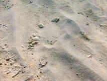 Колючий flounder Стоковые Фото