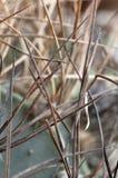 Колючки кактуса Astrophytum Стоковая Фотография RF