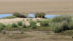 Крабы в природном парке Estrecho, Тарифе, Испании акции видеоматериалы