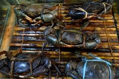 Крабы в ресторане морепродуктов Стоковая Фотография