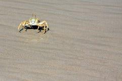 Крабы на пляже Стоковое Изображение RF