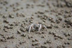 Краб барботера песка или краб солдата Стоковые Фотографии RF