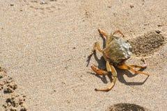 Краб вползая на пляже стоковое изображение rf