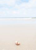 Краб затворницы на пляже. Стоковая Фотография RF