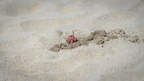 Краб идя на пляж стоковое изображение rf