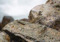 Краб и рыбы, Ла Digue, Сейшельские островы Стоковое Изображение RF