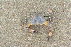 Краб моря Стоковое Фото