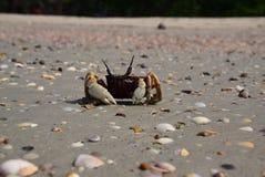 Краб моря Стоковая Фотография